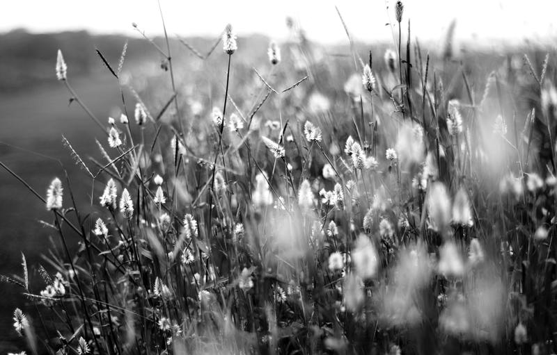 Black and White Photography Session